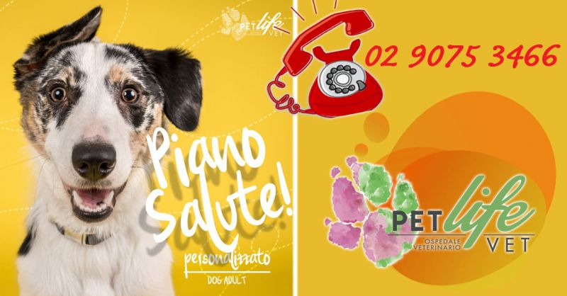 Offerta Programma vaccinale Completo Cani Milano - Occasione Sconto Check Up annuale Cane Basilio